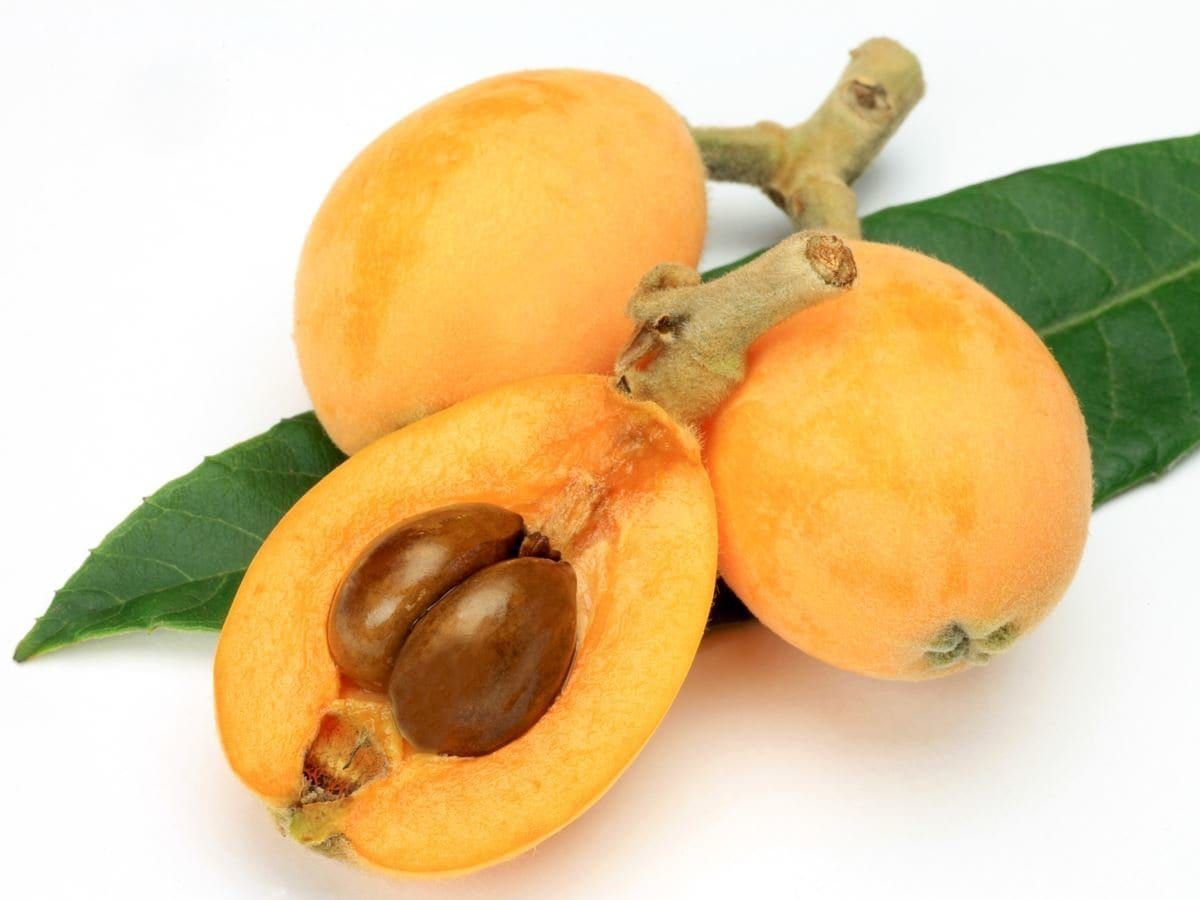 What is good for loquat body and health
