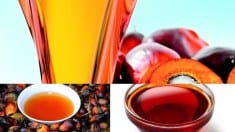 Palm oil health benefits