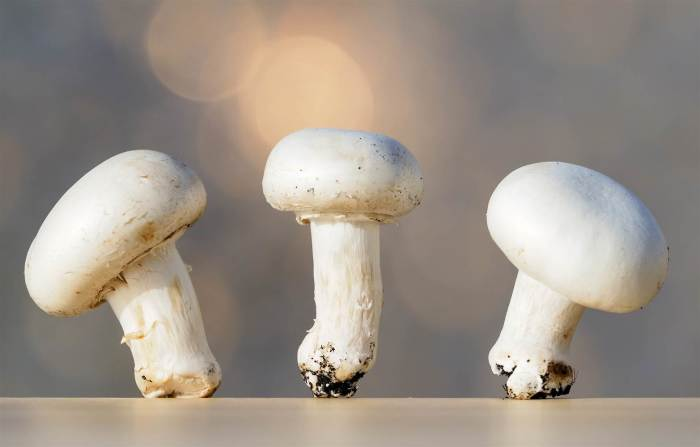 Easiest way to grow Mushrooms at home