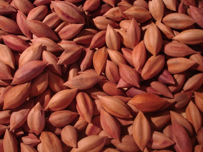 Health benefits of pili nuts