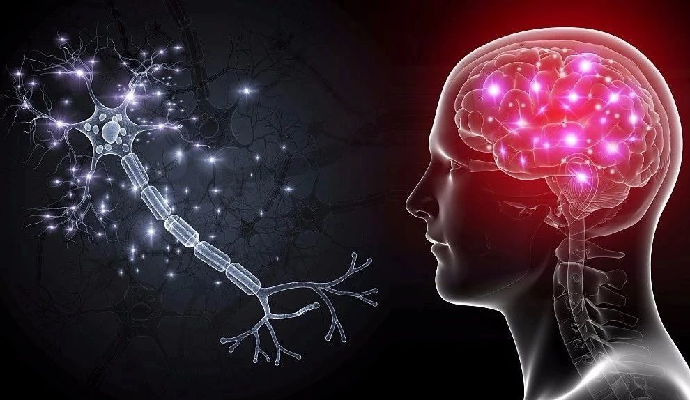 5 healthy habits that help restore human brain cells