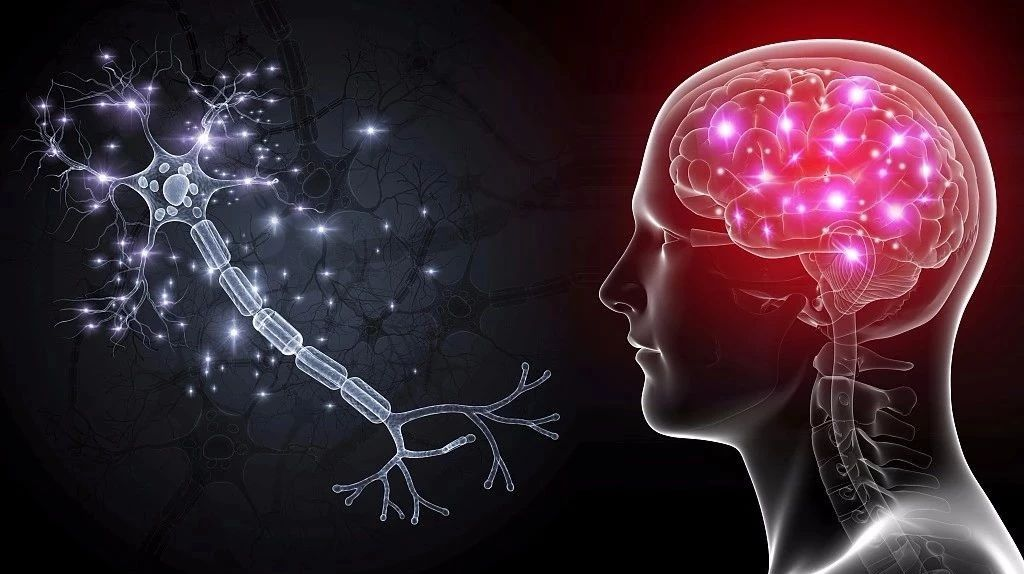 5 habits that restore brain cells
